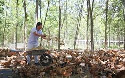 """Anh nông dân Quảng Trị trở thành tỷ phú nhờ nuôi """"lung tung"""" đủ loại gà, vịt, heo theo cách này"""
