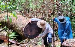 Lâm Đồng: Khởi tố vụ án, khởi tố 14 bị can liên quan vụ phá rừng dổi tự nhiên