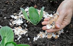 Clip: Những mẹo hay khi trồng rau từ vỏ trứng - không ngờ dễ thế này!