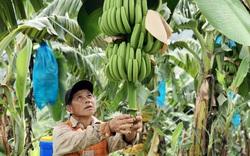Trung Quốc đột nhiên tạm dừng thu mua loại trái cây này, nông dân Lào Cai, Lai Châu đứng ngồi không yên