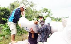 """Kéo dài """"cánh tay"""" kết nối, tiêu thụ nông sản (bài 3): Giúp dân thu hoạch lúa hè thu bằng mọi cách"""