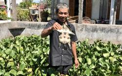 """Nuôi loài ăn tạp và ít mắc bệnh, nông dân ở TT-Huế """"ngồi mát ăn bát vàng"""""""