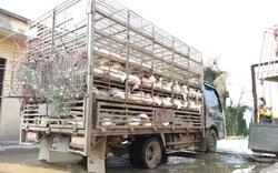 Giá gia cầm hôm nay 27/9: Giá gà công nghiệp tiếp tục giảm, giá vịt thịt miền Bắc cao nhất cả nước