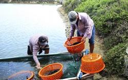 Huyện nào của tỉnh Khánh Hòa đang cần bán hàng trăm tấn cá mú đặc sản to bự?