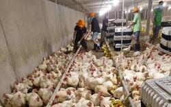 Giá gia cầm hôm nay 30/9: Giá gà công nghiệp miền Nam nhích lên, chuyên gia dự đoán tin vui cuối năm