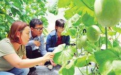 Độc chiêu trồng rau quả sạch, xài đèn Led của gái 9x ở miền biên