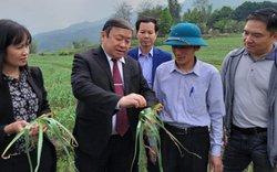 Lào Cai cần quy hoạch vùng  sản xuất nông sản quý, hiếm
