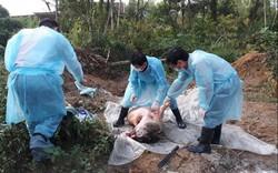 """Vì sao Bộ Y tế """"phớt"""" cuộc họp BCĐ Phòng, chống dịch tả lợn châu Phi?"""