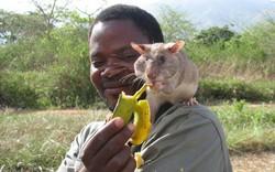 Chuột có thể trở thành vật nuôi thân thiết của con người?
