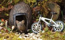 Chùm ảnh: Ngôi làng đẹp như cổ tích dành riêng cho những chú chuột