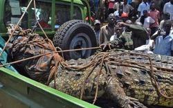 Cá sấu khổng lồ ăn thịt người hàng loạt bị bắt sống
