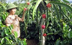 Mong DAP Lào Cai mở rộng thị trường