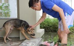 Ảnh: Lội nước ngập hớt hải tìm chó cưng trong khu đô thị ở Hà Nội