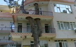"""Những công trình phải """"nhượng bộ"""" cho cây xanh"""