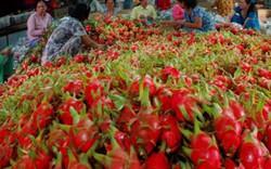 Nông nghiệp 2016 tăng trưởng ngoạn mục