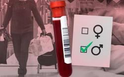 Nhiều người Trung Quốc lén đem máu phụ nữ mang thai đến Hong Kong để làm gì?