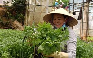 Hạnh phúc và yêu thương ở Giáo xứ Minh Giáo tỉnh Lâm Đồng (bài 1): Gửi tặng vùng dịch hơn 800 tấn rau sạch