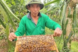 """Nuôi loài côn trồng lấy mật, lão nông Hà Tĩnh """"bỏ túi"""" hàng trăm triệu mỗi năm"""