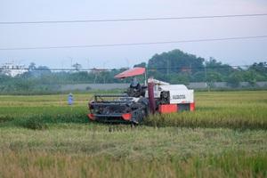 Hà Nội: Lão nông kiếm hơn 100 triệu đồng mỗi vụ từ nghề... gặt thuê
