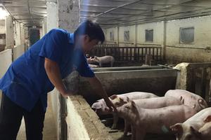Chàng thanh niên người Tày 9X kiếm nửa tỷ mỗi năm từ mô hình nuôi lợn công nghệ cao