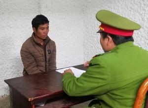 Lâm Đồng: Bắt tạm giam 1 đối tượng trong vụ cưa hạ hàng trăm cây thông tại tiểu khu 132