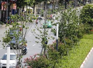 """Hình ảnh hàng cây phong lá đỏ tại Hà Nội bỗng """"hồi sinh"""" giữa nắng hè oi bức"""