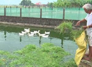Phát triển ương nuôi cá giống thu lợi nhuận ổn định