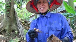 """Quảng Ninh: Nuôi con đặc sản """"nhát chết"""" trước cho không ai lấy, nay là """"lộc trời"""", nhà nào nuôi nhà đó đổi đời"""