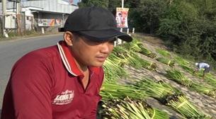 An Giang: Vùng đất dân đi ra sông cắt cây dại bán cũng kiếm được tiền