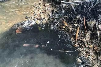 Giữa sự cố nước sạch sông đà nhiễm dầu thải, Viwasupco báo lãi lớn