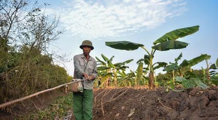"""Câu con """"lộc trời cho"""": Nông dân Hải Dương kiếm nửa triệu đồng mỗi ngày"""