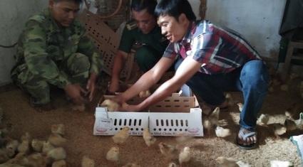 8X Quảng Trị tiết kiệm tiền, mua gà giống tặng người nghèo miền núi