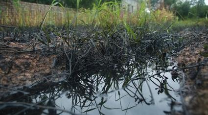 Thông  tin mới vụ xả dầu thải đen kịt ra đồng ruộng ở Hà Nội