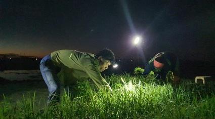 Thanh Hoá: Trốn nắng, nông dân đi cấy từ rạng sáng