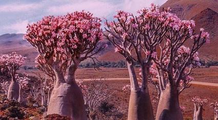"""Đảo Socotra – một vùng đất """"quái lạ"""" khiến khách du lịch giật mình"""