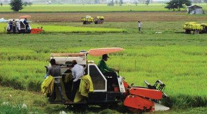Phát triển HTX nông nghiệp kiểu mới: Khâu đột phá để  tái cơ cấu nông nghiệp