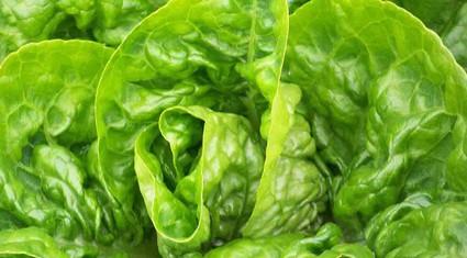 Một công ty Hà Lan lập trại giống rau ở Đà Lạt