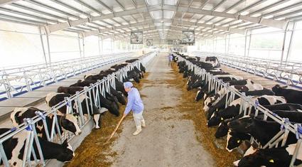 Tiếp vốn cho nông nghiệp công nghệ cao