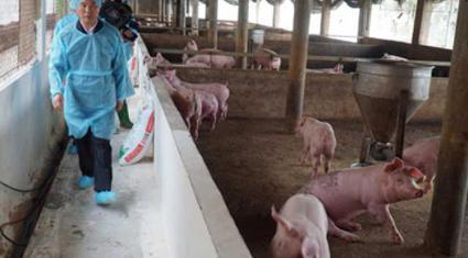 Giá lợn hơi không ngừng tăng, áp lực tái đàn và kiểm soát dịch