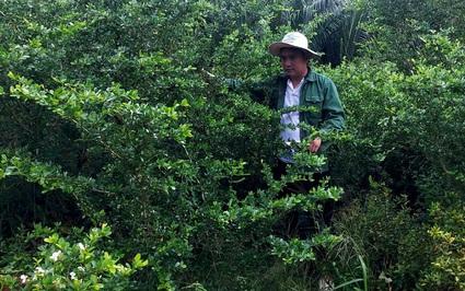 Tiền Giang: Nhân giống cây rừng quý hiếm, có cây đột biến làm bonsai chơi kiểng, nông dân 9X thu lời đậm