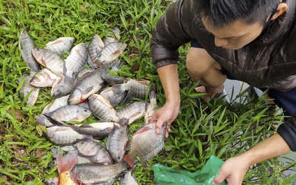 """Hà Nội: """"Cần thủ"""" câu trộm và bán cá ngay tại hồ Tây"""