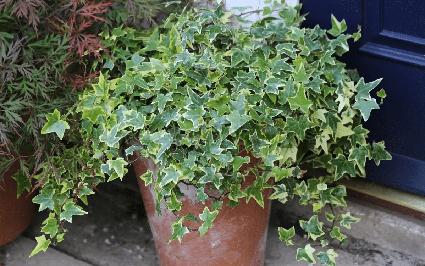7 cây cảnh hút bụi mịn tốt nhất, giúp thanh lọc không khí nên trồng trong nhà