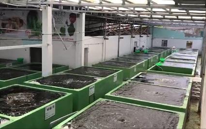 Khám phá vùng nuôi rong nho biển đạt kỷ lục sản lượng lớn nhất Việt Nam