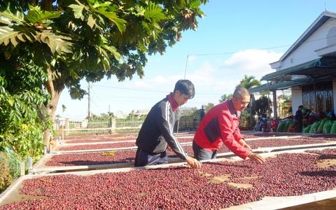 Việt Nam chủ yếu xuất khẩu cà phê chưa rang, chưa khử chất cafein vào Thụy Điển, Đan Mạch và Na Uy
