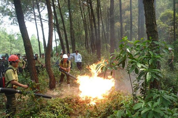 Sẽ diễn tập phòng, chống cháy rừng cấp quốc gia tại Hòa Bình