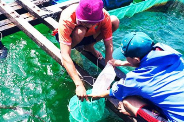Loài điệp seo tỉnh Khánh Hòa vừa nhân giống, bán đắt như tôm hùm
