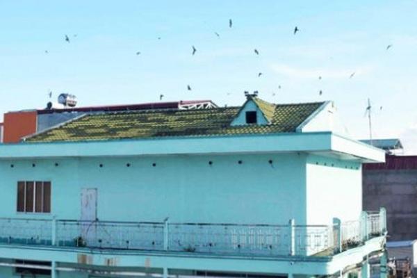 Cà Mau: Theo dự thảo Nghị quyết, khu vực nào không nuôi chim yến?