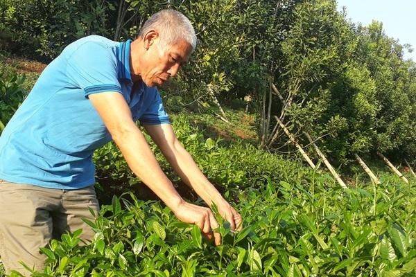 Bước tiến trong sản xuất nông nghiệp ở thành phố Lai Châu
