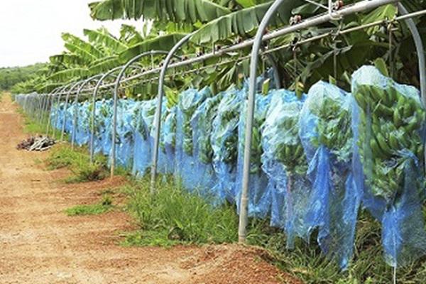 THACO đẩy mạnh phát triển cơ khí nông nghiệp, phục vụ nhu cầu trong nước và xuất khẩu
