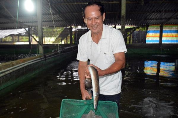 """Bạc Liêu: Trót """"mê"""" loài cá vừa dài vừa to, ông """"nông dân tay ngang"""" nuôi trên cạn, bắt cả tấn, bán 400 ngàn/ký"""